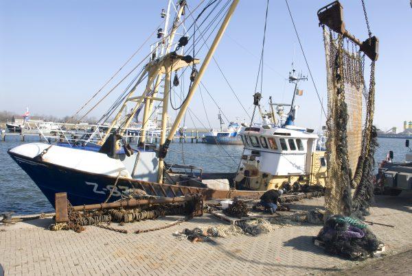 Parels van het Europees Visserijfonds